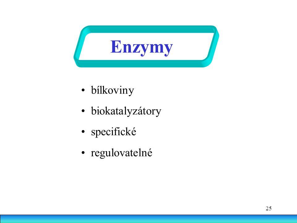 Enzymy • bílkoviny • biokatalyzátory • specifické • regulovatelné