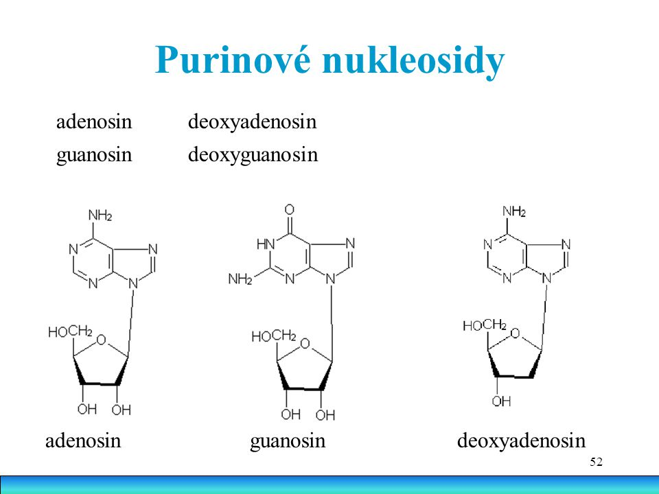 Purinové nukleosidy adenosin deoxyadenosin guanosin deoxyguanosin