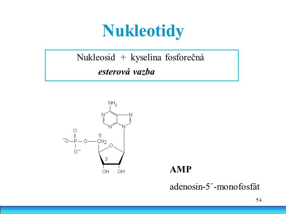 Nukleotidy Nukleosid + kyselina fosforečná esterová vazba AMP