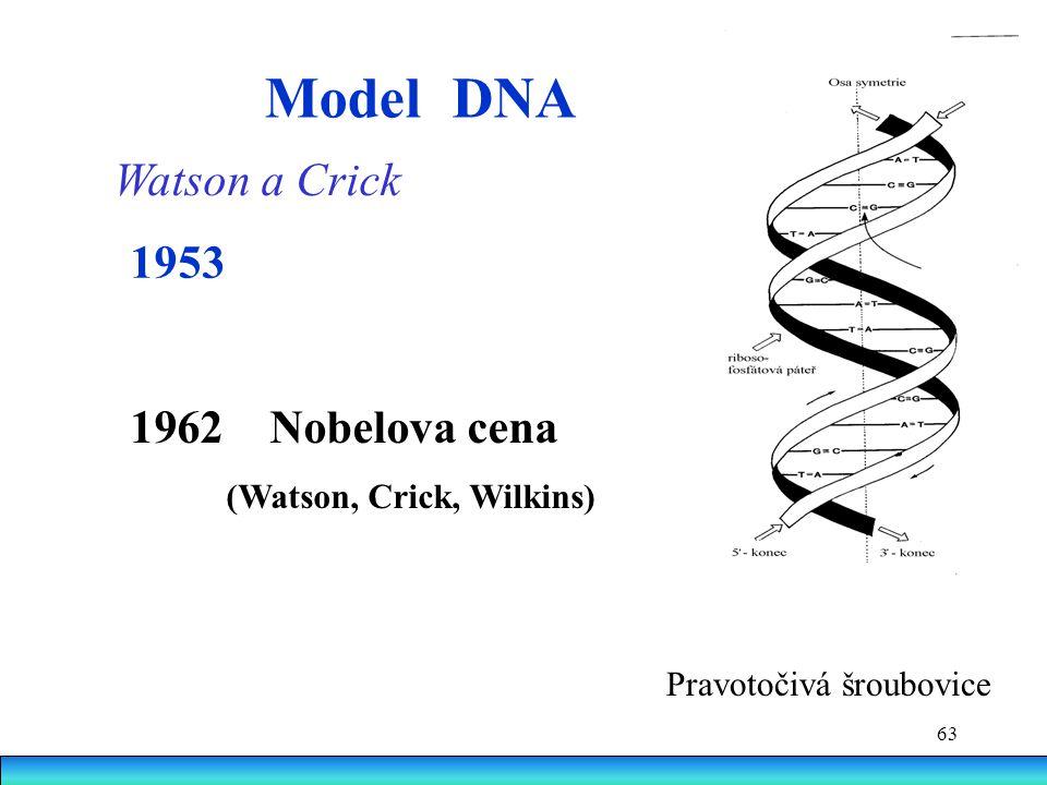 Model DNA Watson a Crick 1953 Nobelova cena (Watson, Crick, Wilkins)