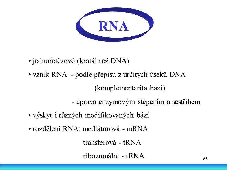 RNA • jednořetězové (kratší než DNA)
