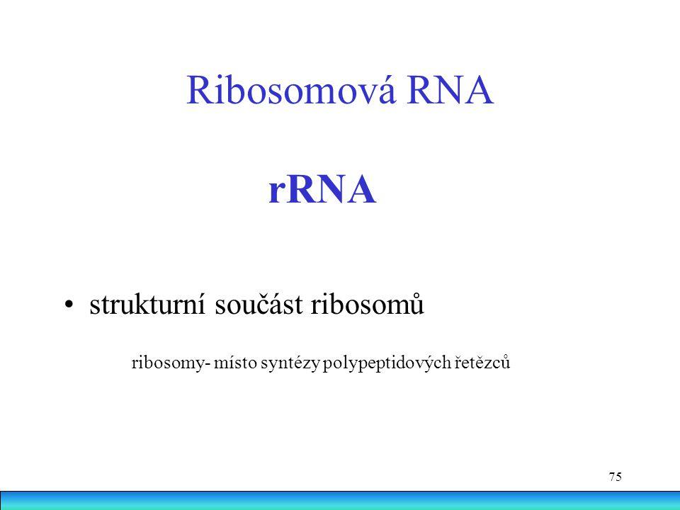 Ribosomová RNA rRNA • strukturní součást ribosomů