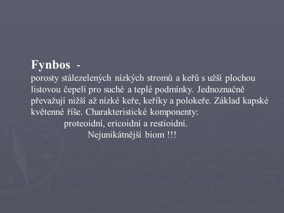 Fynbos -