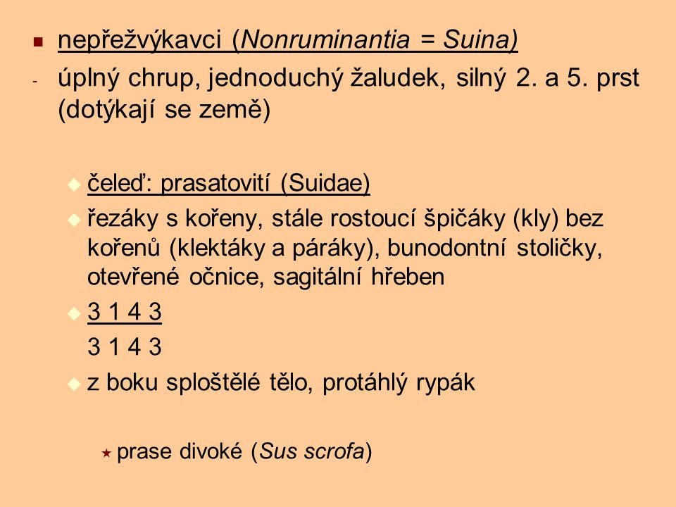 nepřežvýkavci (Nonruminantia = Suina)