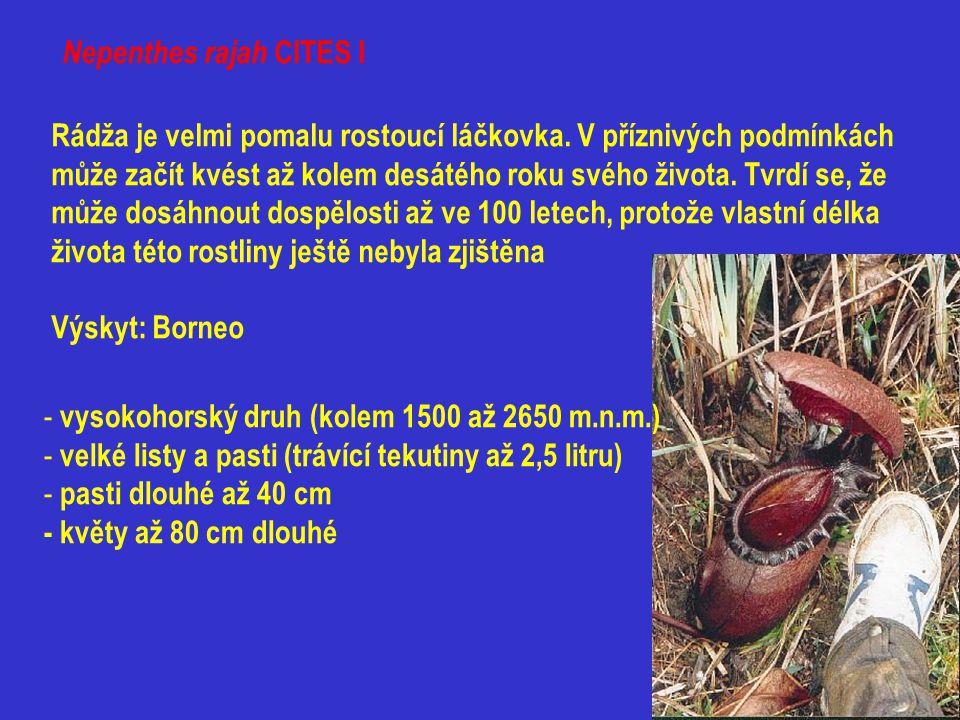 Nepenthes rajah CITES I