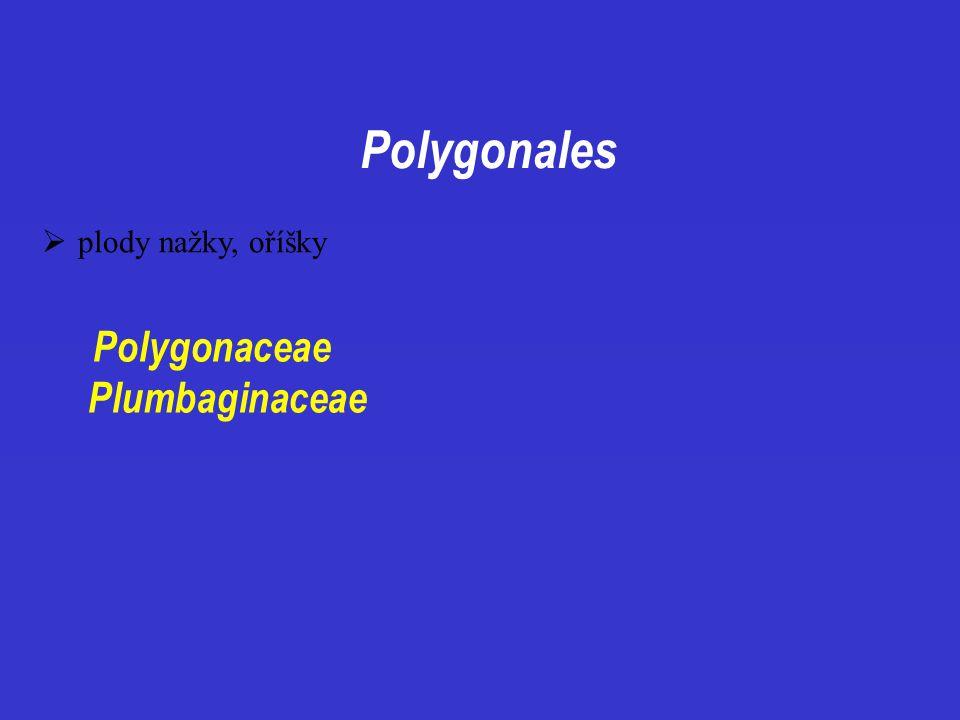 Polygonales plody nažky, oříšky Polygonaceae Plumbaginaceae