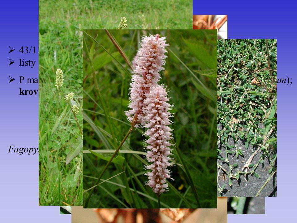Polygonaceae 43/1100 listy střídavé, z palistů vzniká botka