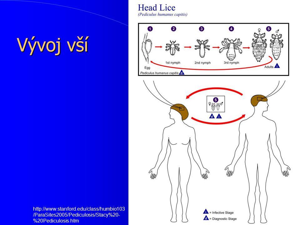 Vývoj vší http://www.stanford.edu/class/humbio103/ParaSites2005/Pediculosis/Stacy%20-%20Pediculosis.htm.