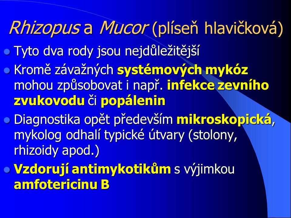 Rhizopus a Mucor (plíseň hlavičková)