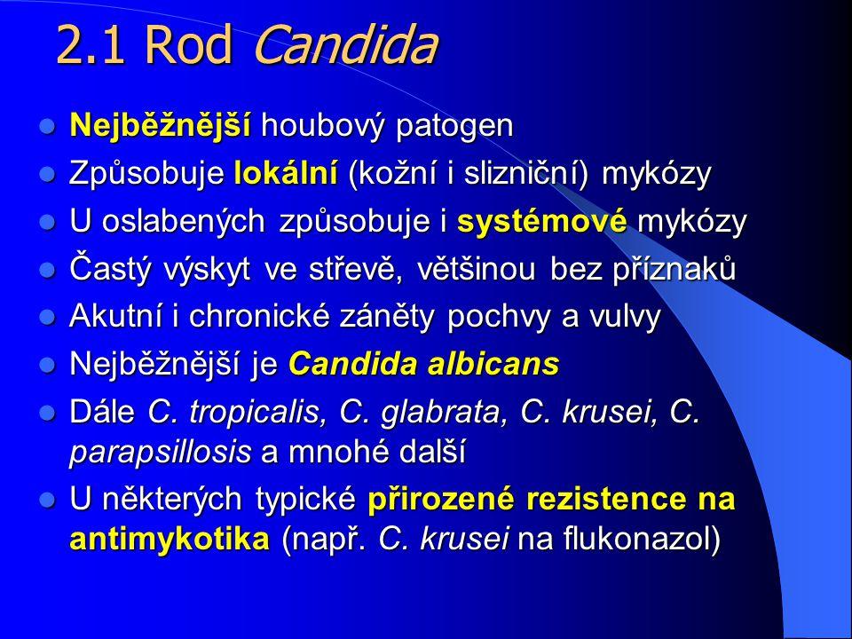 2.1 Rod Candida Nejběžnější houbový patogen
