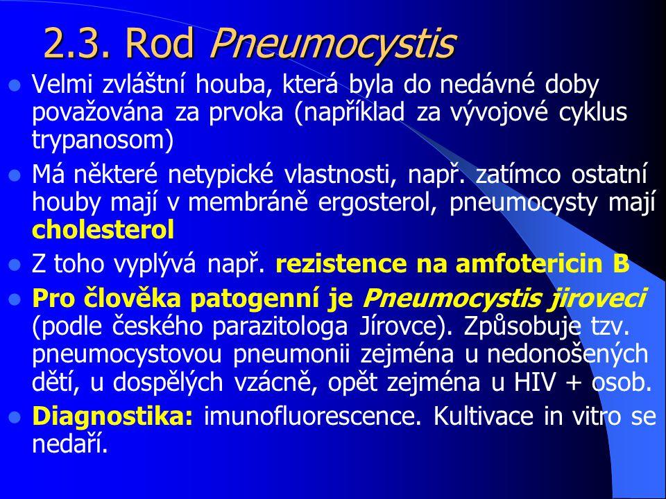 2.3. Rod Pneumocystis Velmi zvláštní houba, která byla do nedávné doby považována za prvoka (například za vývojové cyklus trypanosom)