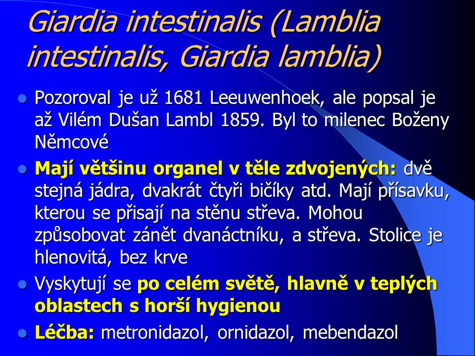 Giardia intestinalis (Lamblia intestinalis, Giardia lamblia)