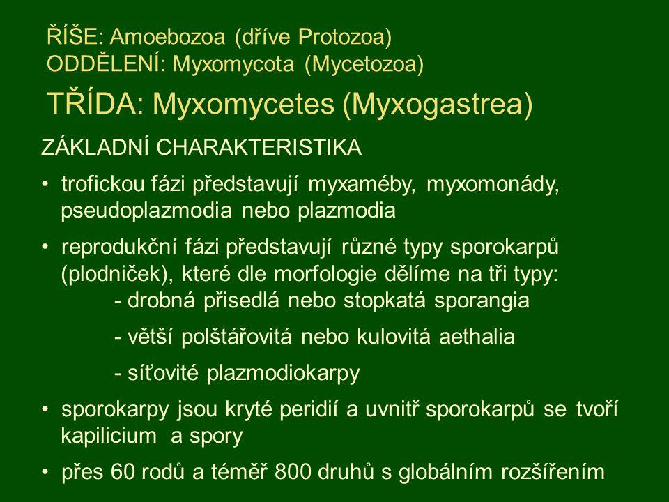 TŘÍDA: Myxomycetes (Myxogastrea)