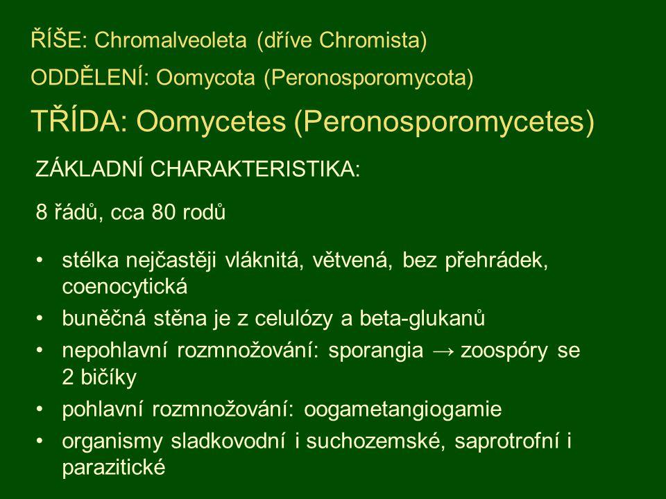 ŘÍŠE: Chromalveoleta (dříve Chromista) ODDĚLENÍ: Oomycota (Peronosporomycota) TŘÍDA: Oomycetes (Peronosporomycetes)
