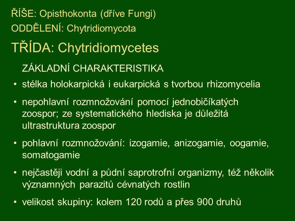 TŘÍDA: Chytridiomycetes