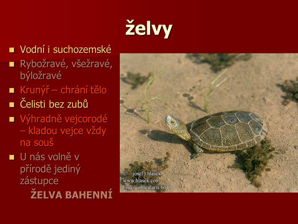 želvy Vodní i suchozemské Rybožravé, všežravé, býložravé