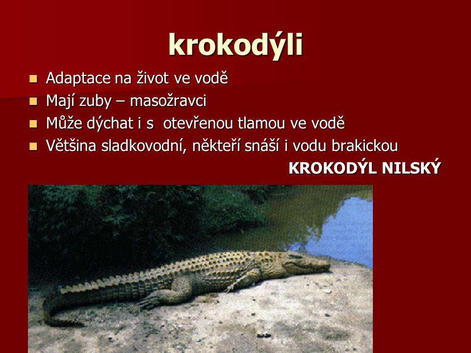 krokodýli Adaptace na život ve vodě Mají zuby – masožravci