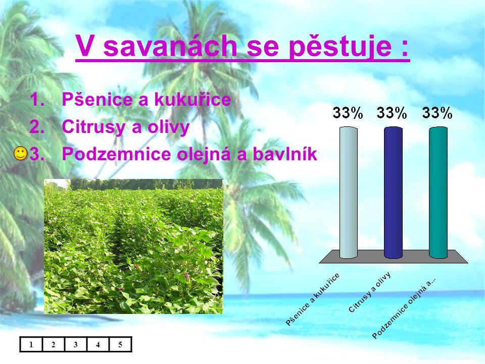 V savanách se pěstuje : Pšenice a kukuřice Citrusy a olivy