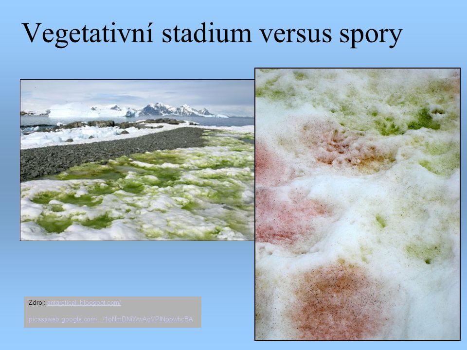 Vegetativní stadium versus spory