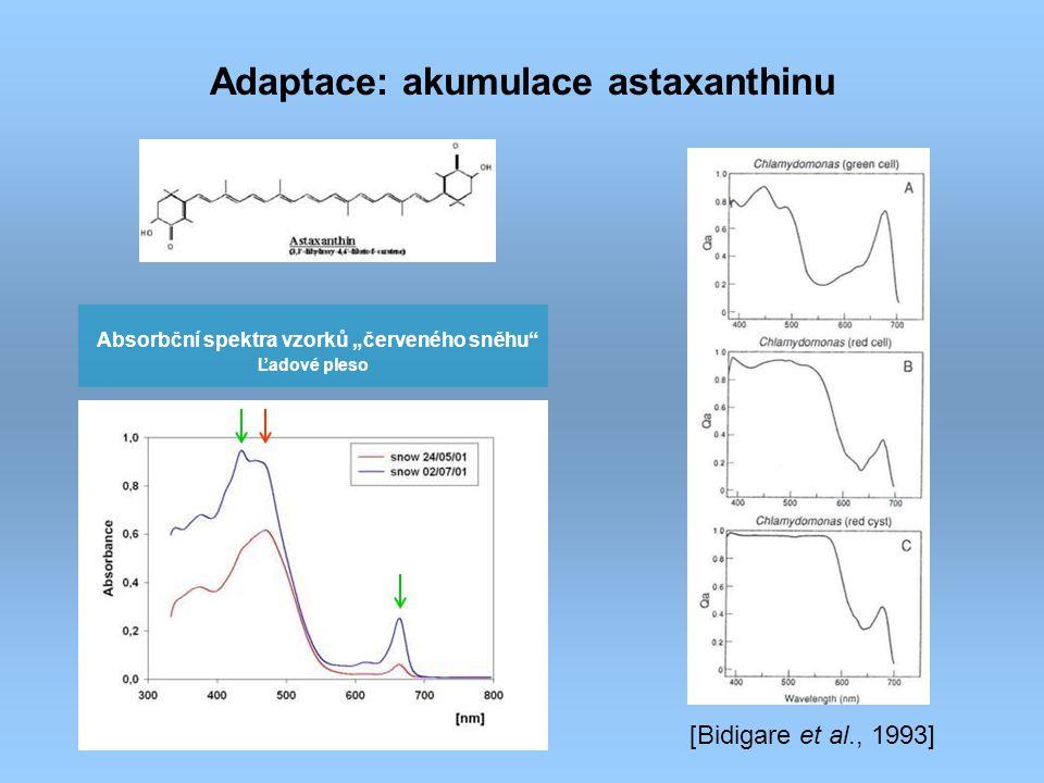 Adaptace: akumulace astaxanthinu