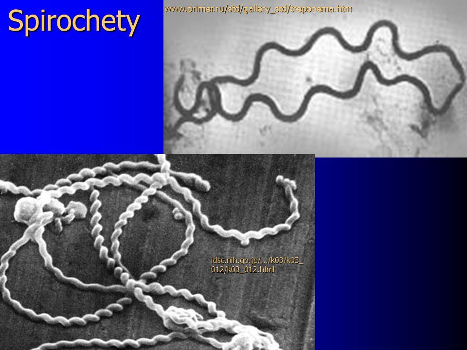 Spirochety www.primer.ru/std/gallery_std/treponema.htm