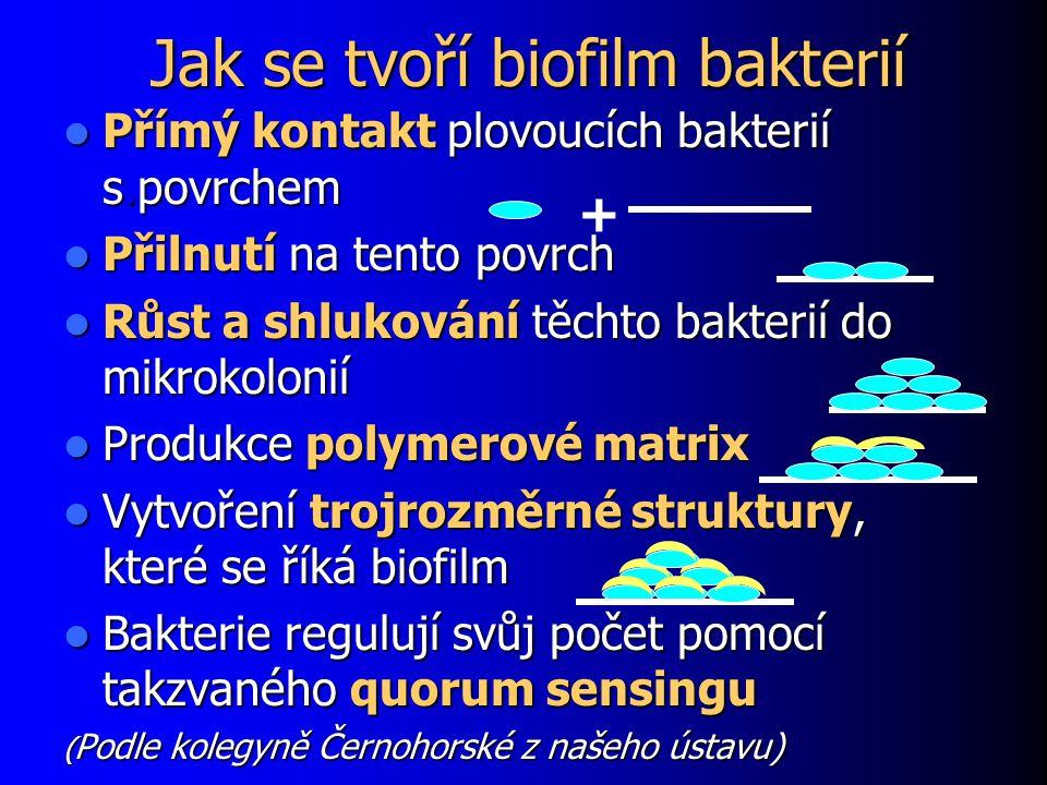 Jak se tvoří biofilm bakterií