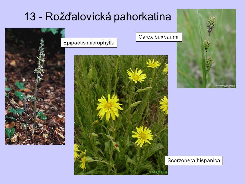 13 - Rožďalovická pahorkatina