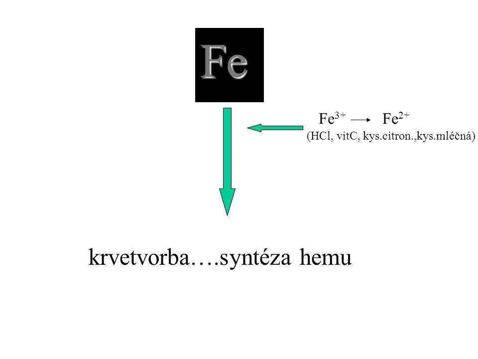 Fe krvetvorba….syntéza hemu Fe3+ Fe2+