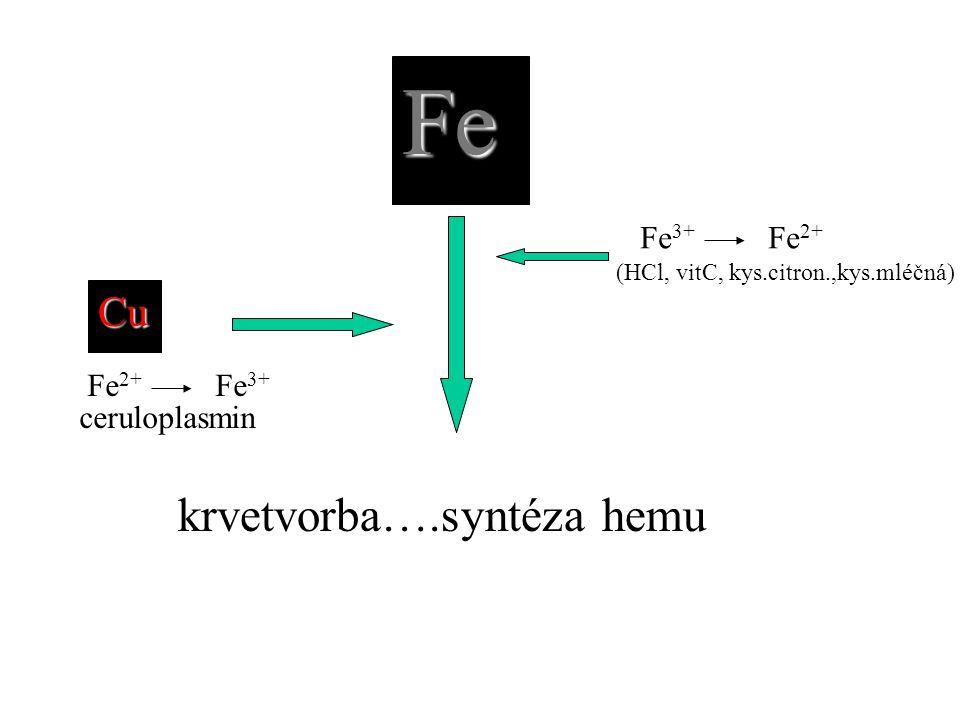 Fe krvetvorba….syntéza hemu Cu Fe3+ Fe2+ ceruloplasmin Fe2+ Fe3+
