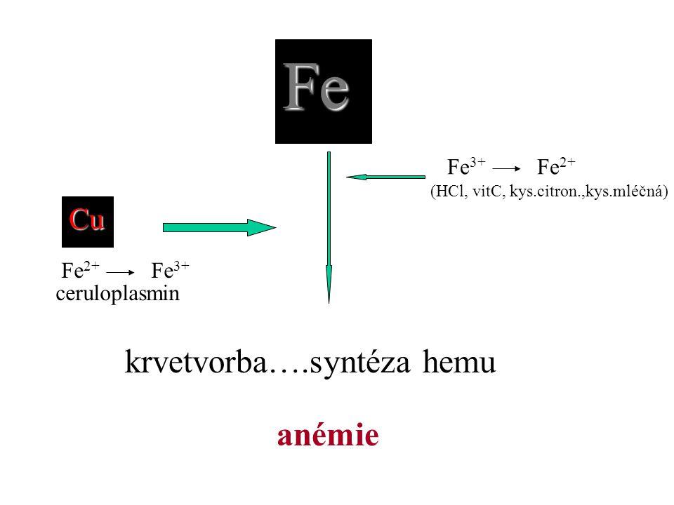 Fe krvetvorba….syntéza hemu anémie Cu Fe3+ Fe2+ ceruloplasmin Fe2+