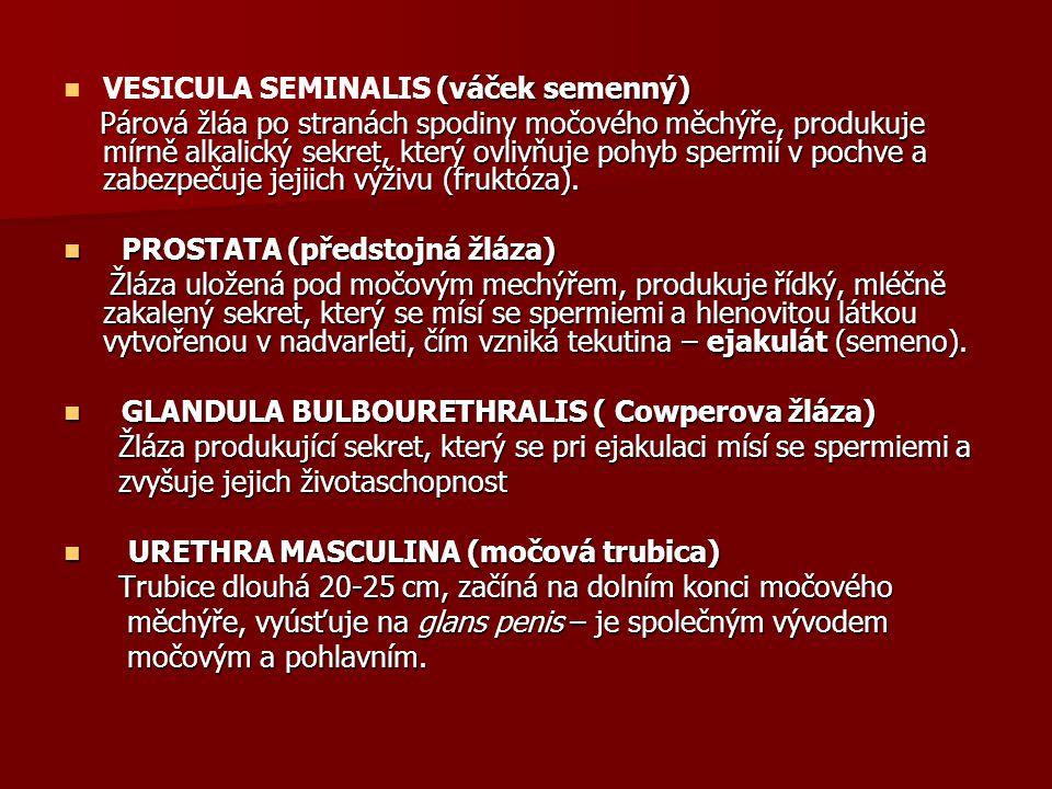 VESICULA SEMINALIS (váček semenný)