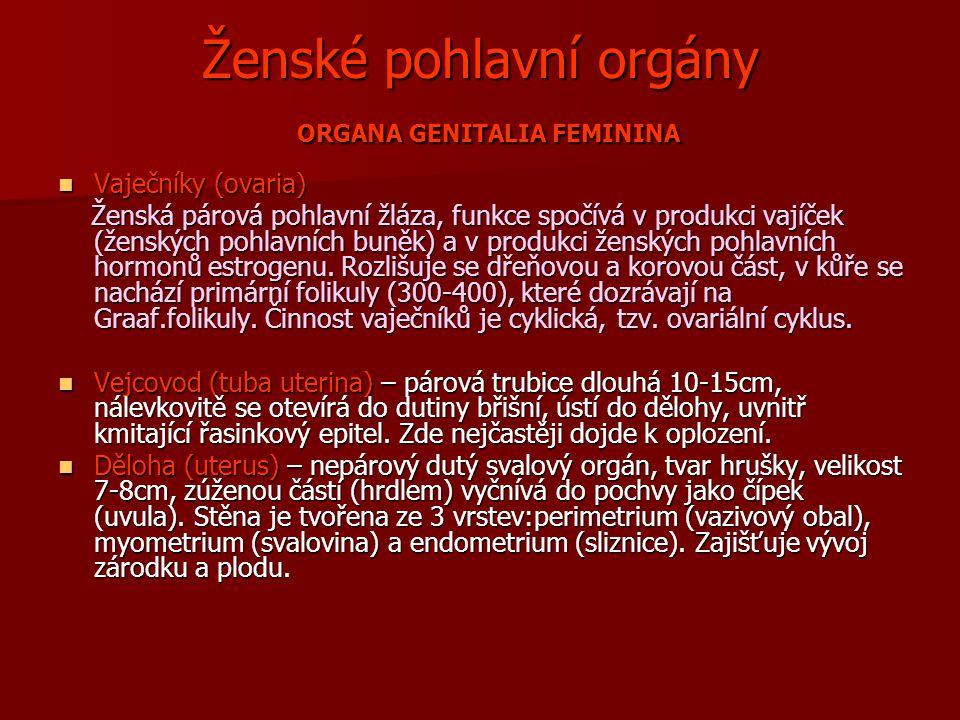 Ženské pohlavní orgány ORGANA GENITALIA FEMININA