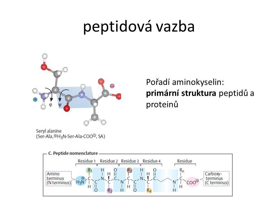 peptidová vazba Pořadí aminokyselin: