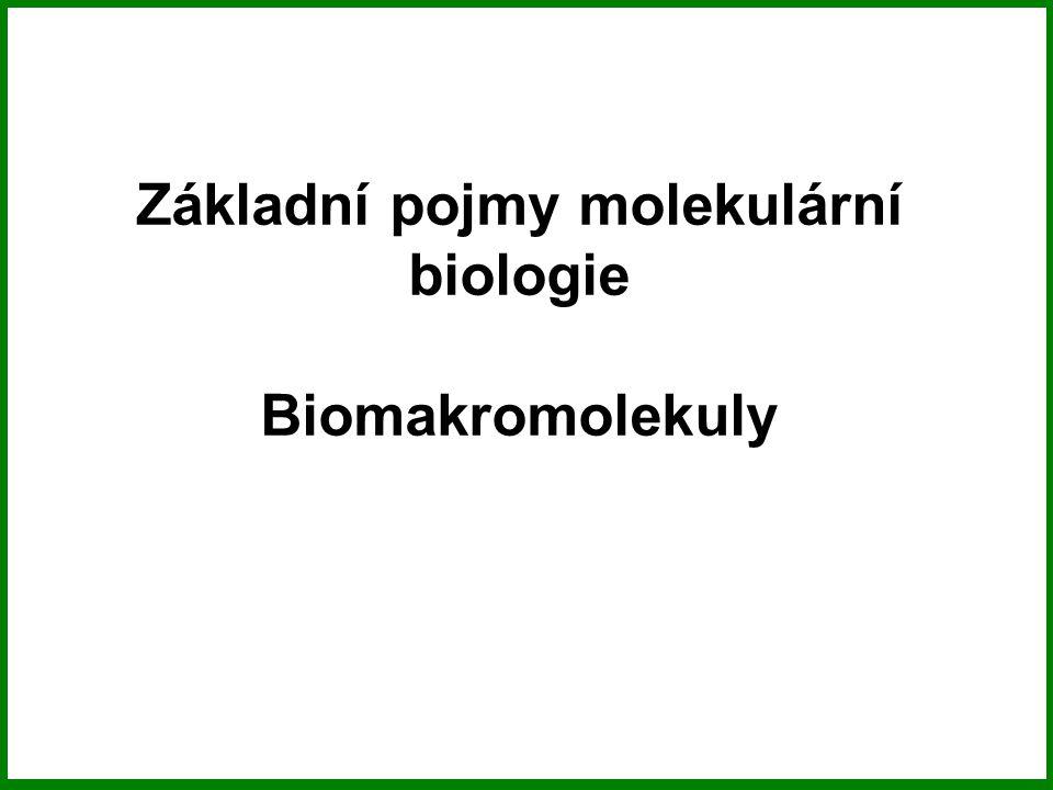 Základní pojmy molekulární biologie Biomakromolekuly