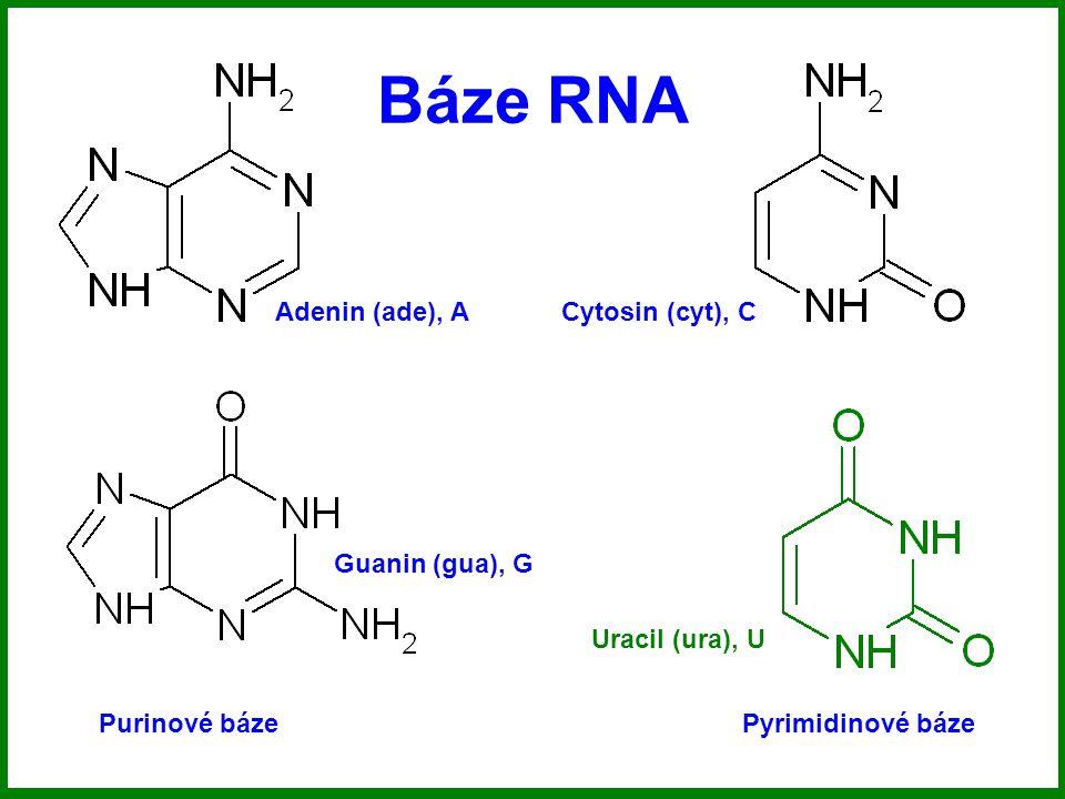 Báze RNA Adenin (ade), A Cytosin (cyt), C Guanin (gua), G