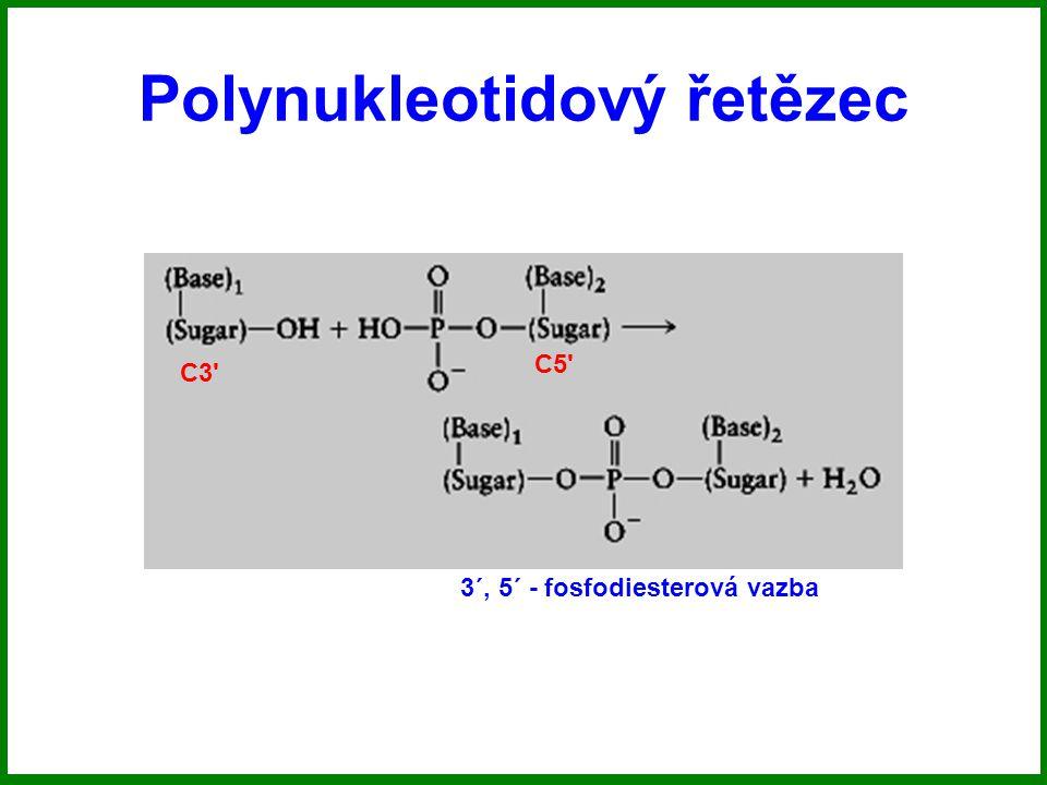 Polynukleotidový řetězec