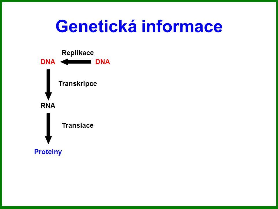 Genetická informace Replikace DNA DNA Transkripce RNA Translace