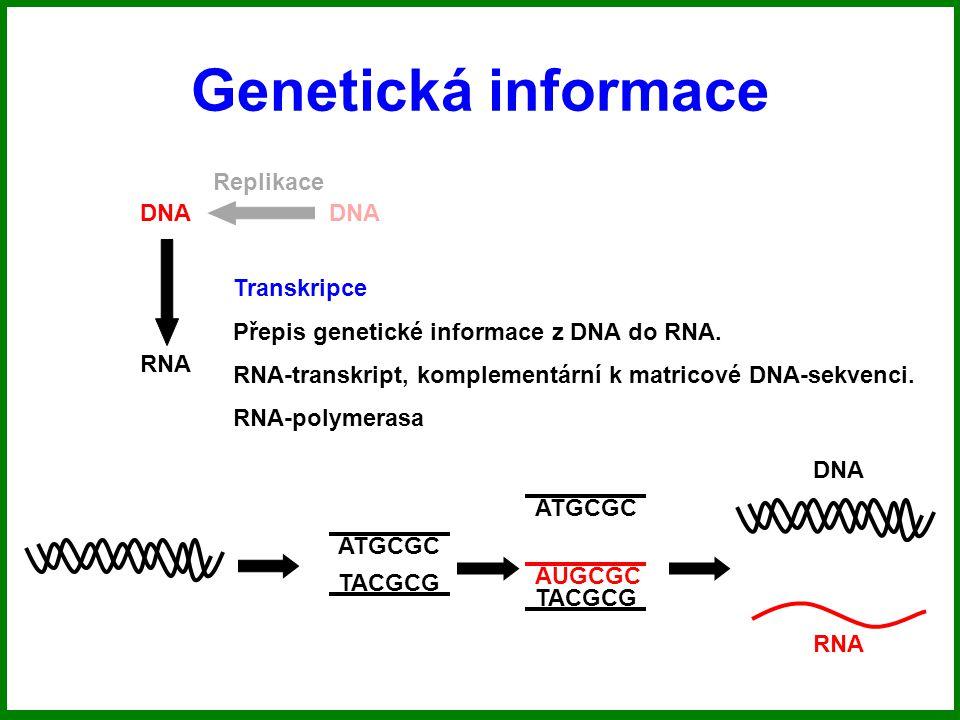 Genetická informace Replikace DNA Transkripce