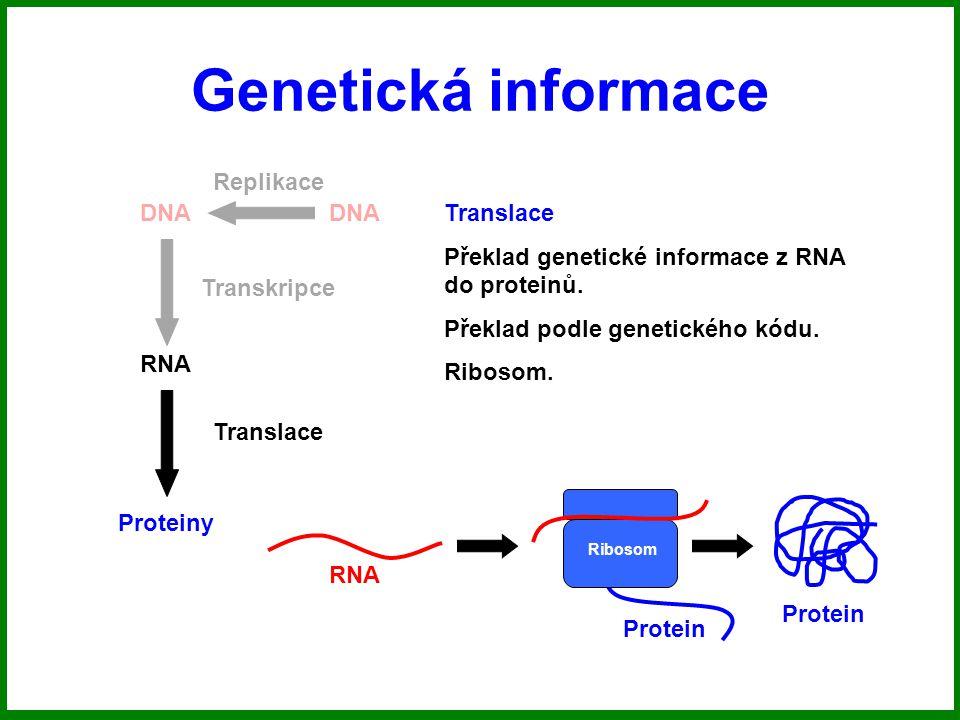 Genetická informace DNA RNA Proteiny Replikace Transkripce Translace