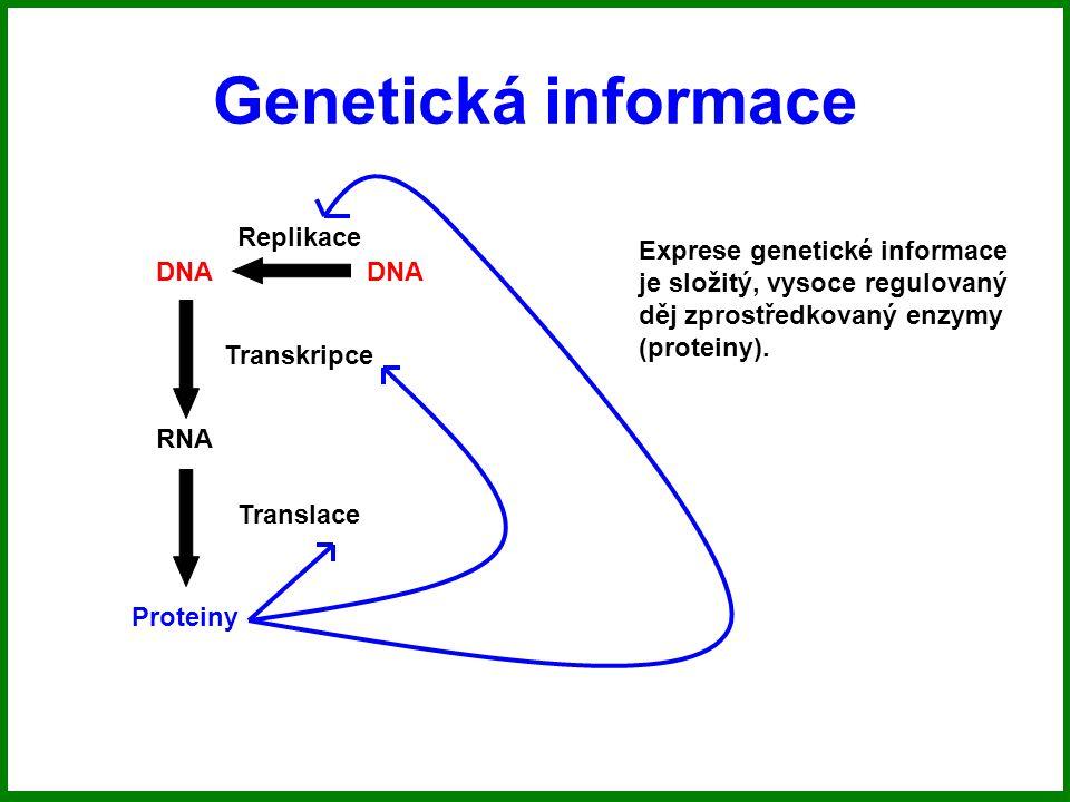 Genetická informace Replikace