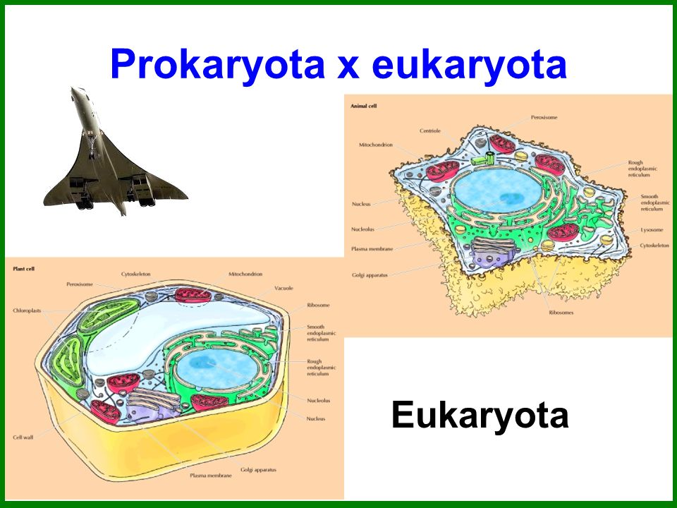Prokaryota x eukaryota