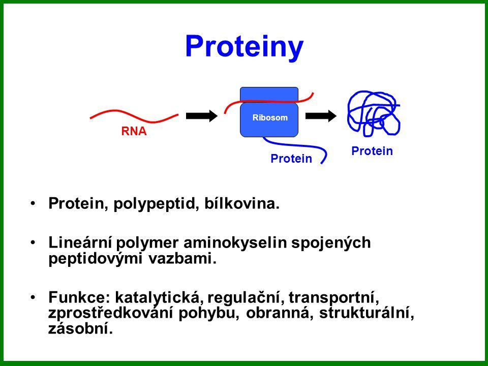 Proteiny Protein, polypeptid, bílkovina.
