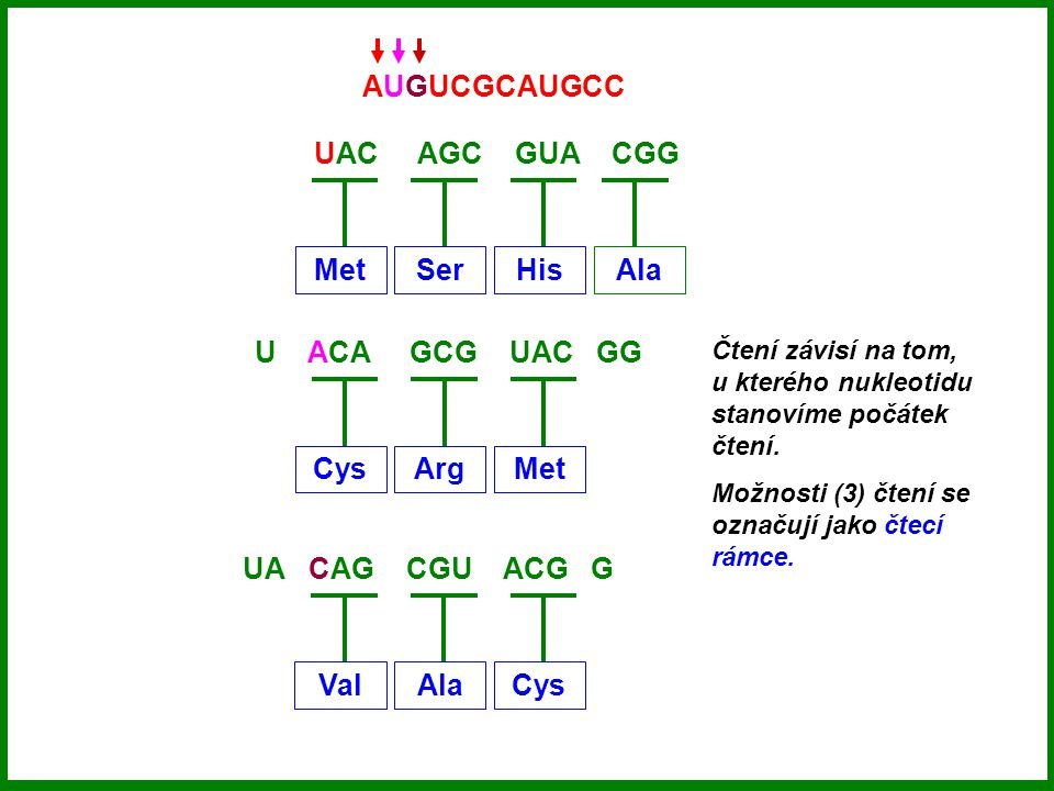 AUGUCGCAUGCC UAC AGC GUA CGG Met Ser His Ala U ACA GCG UAC GG Cys Arg