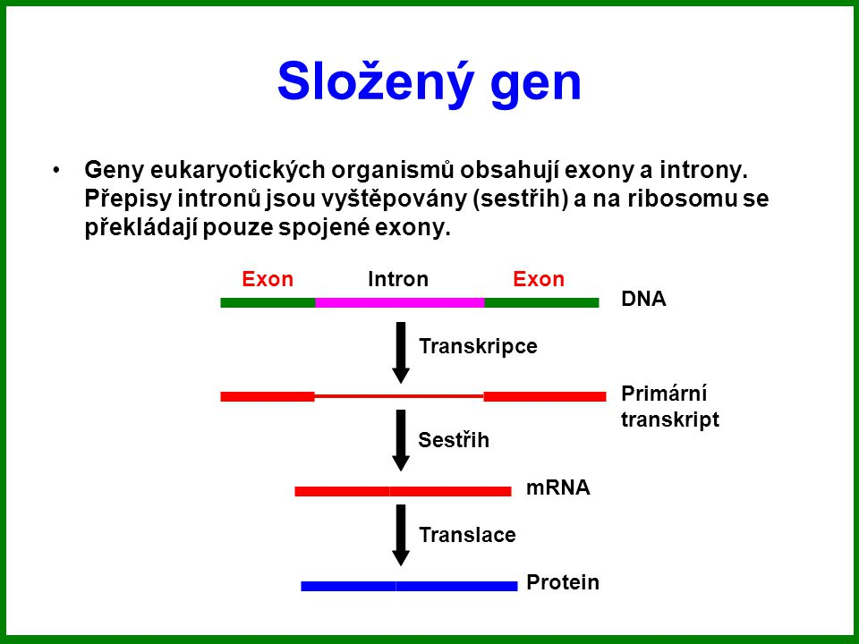 Složený gen