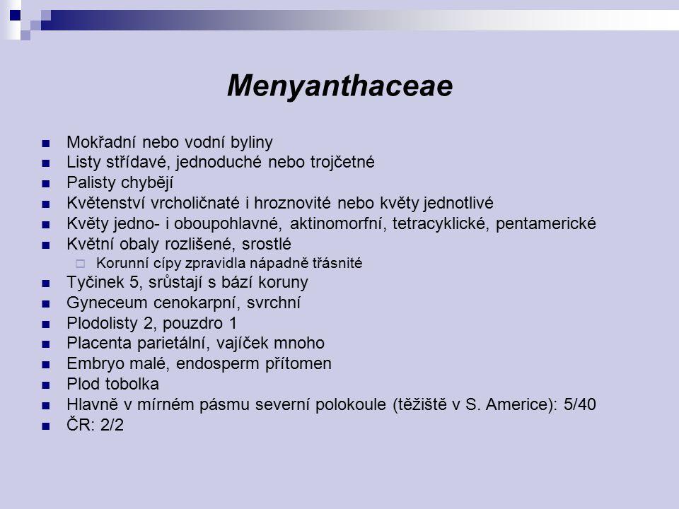 Menyanthaceae Mokřadní nebo vodní byliny