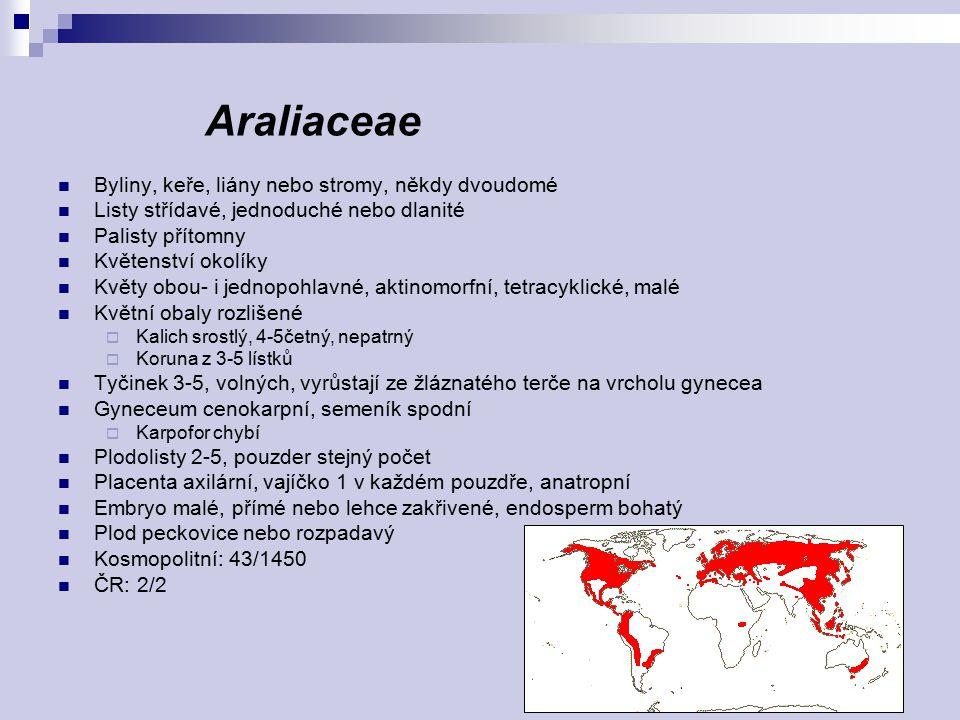 Araliaceae Byliny, keře, liány nebo stromy, někdy dvoudomé