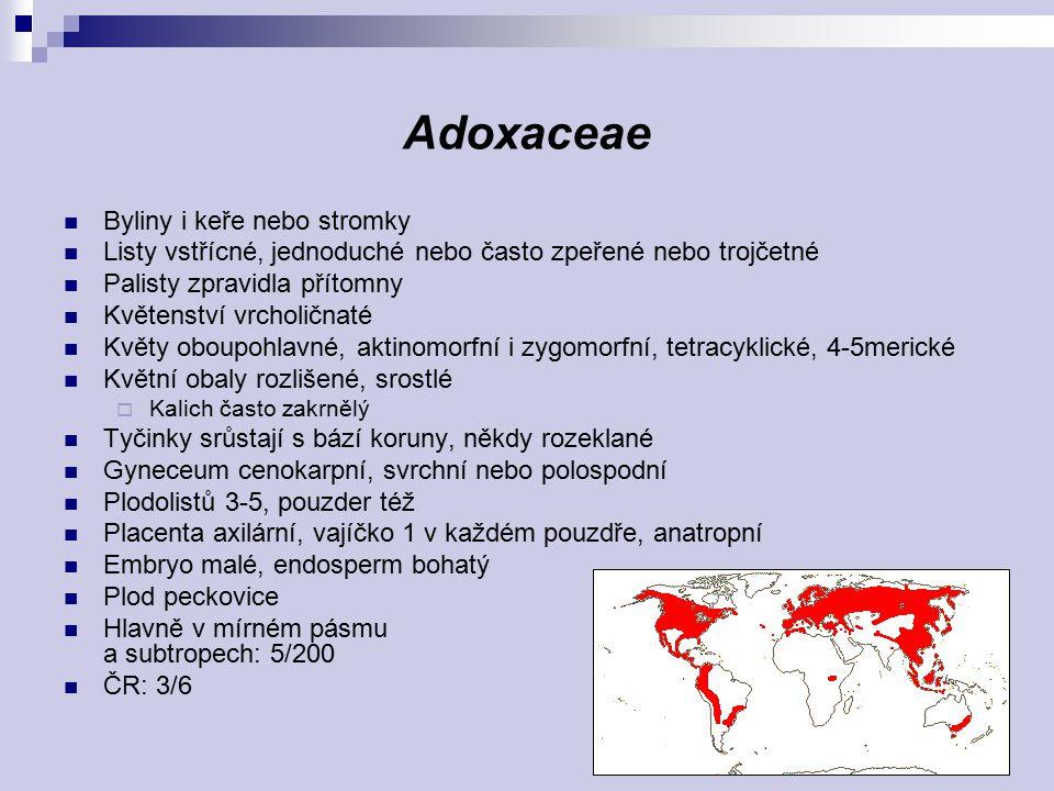 Adoxaceae Byliny i keře nebo stromky