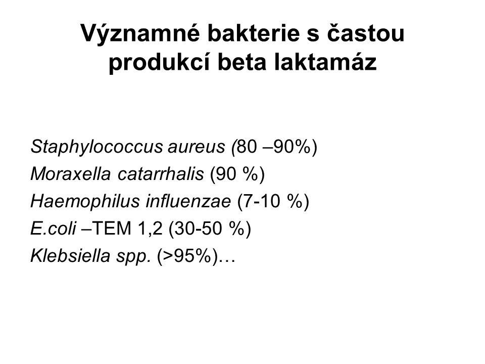 Významné bakterie s častou produkcí beta laktamáz