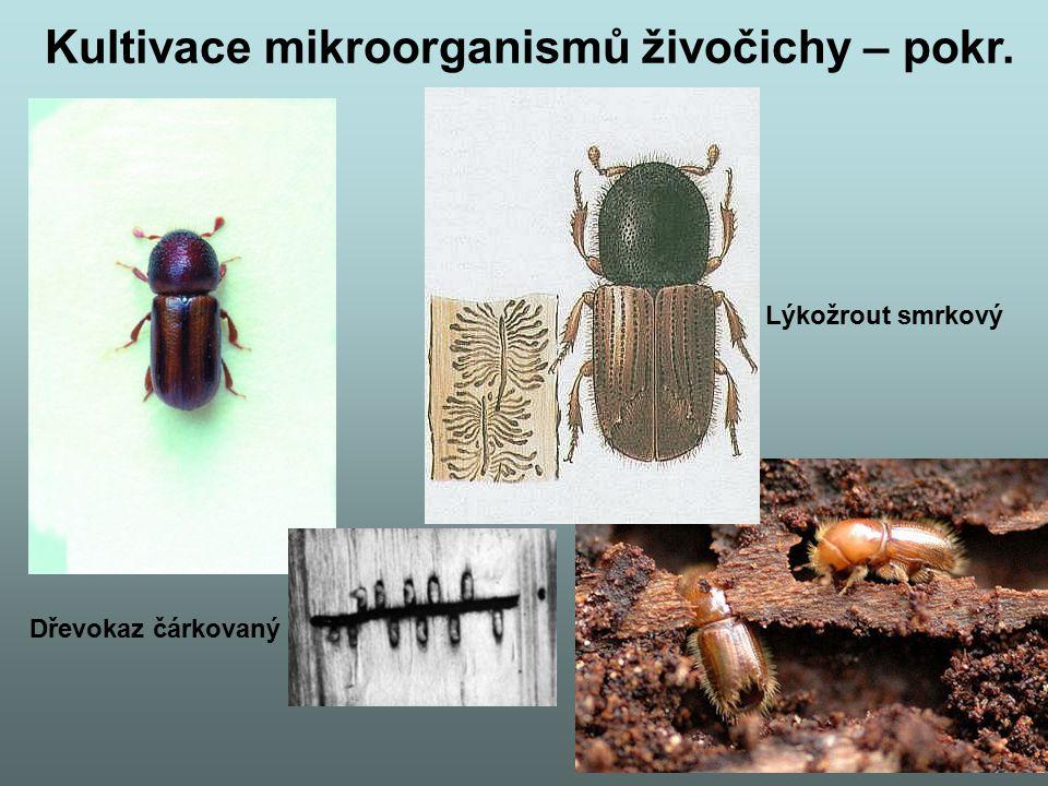 Kultivace mikroorganismů živočichy – pokr.