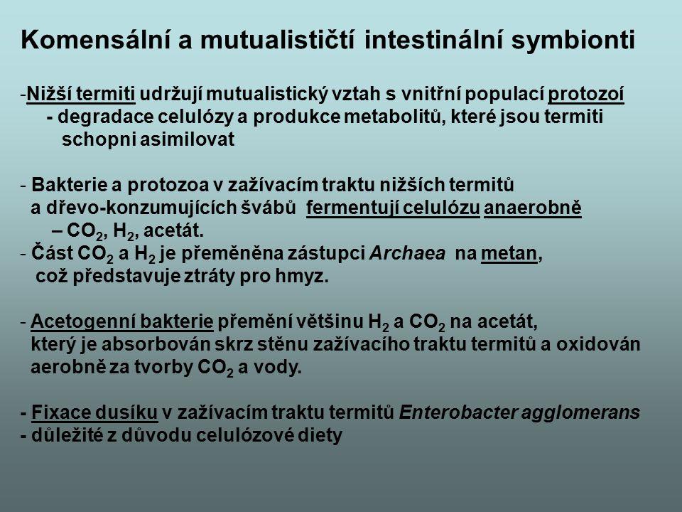 Komensální a mutualističtí intestinální symbionti